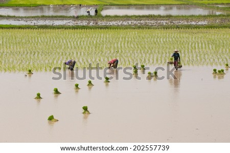 Processes Thailand rice farmers