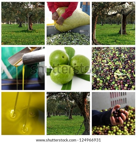 Processing of olives and olive oil - stock photo