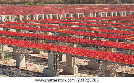 Production of San Marzano tomatoes dried in a natural way under the sun.