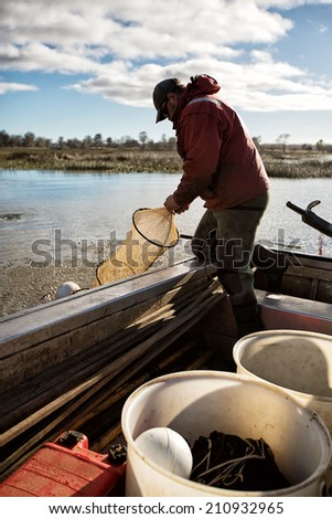 Professional Eel Fisherman hauling in his nets and collecting the fish