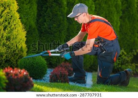 Professional Gardener at Work. Gardener Trimming Garden Plants. Topiary Art. - stock photo