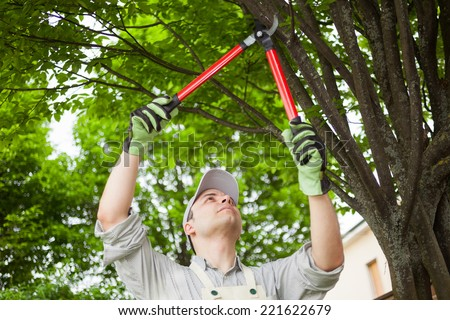 Professional gardener pruning a tree - stock photo