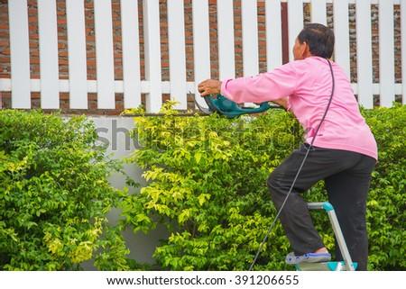 Professional gardener trimming the tree. - stock photo