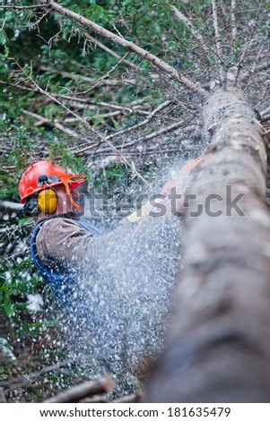 Professional Lumberjack Cutting a big Tree in the Forest during the Winter - stock photo