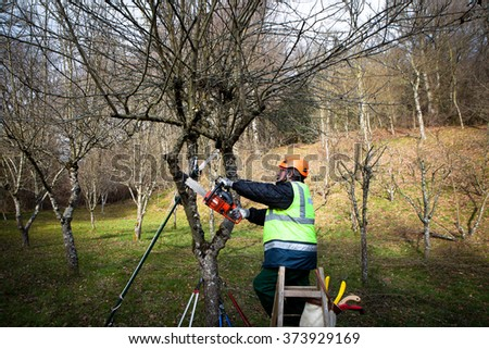 professional man with chainsaw pruning in winter - stock photo