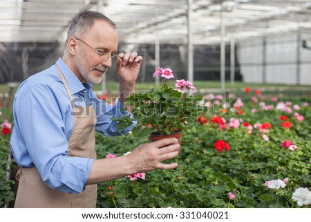 Professional senior florist is holding a flowerpot and looking at it with interest. He is standing and adjusting his eyeglasses at greenhouse. The man is smiling. Copy space in right side - stock photo