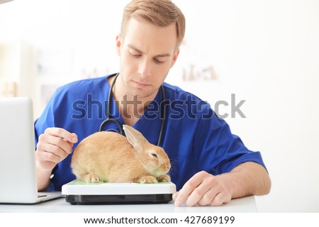 Professional young veterinarian weighing animal on balance - stock photo