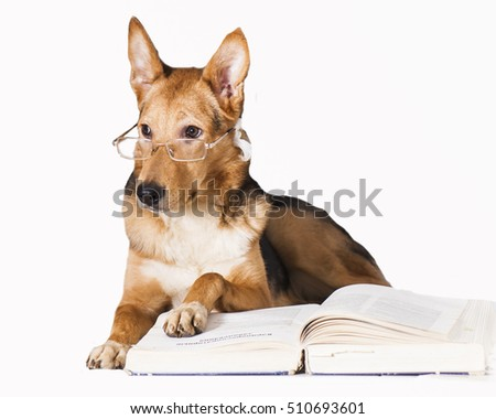 Professor Dog. Isolated on white