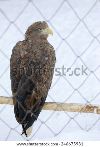 profile eagle bird in a cage on snow background - stock photo