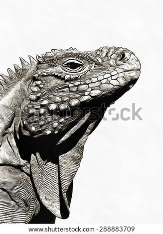 Profile iguana sketch - stock photo