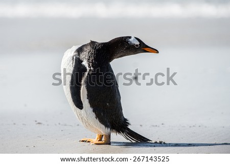 Profile of a gentoo penguin in Antarctica - stock photo
