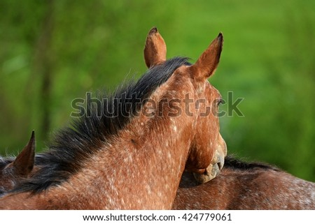 Profile of a horse - stock photo