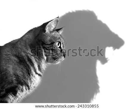 Profile of a house cat casting a lion's shadow on a white wall