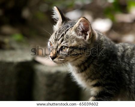 Profile of a kitten - stock photo