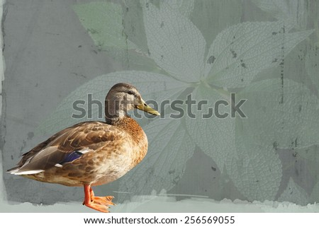 Profile of a Mallard duck female standing against an abstract leaf background - stock photo