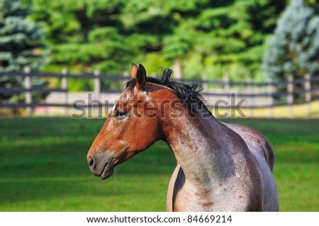 Profile of a roan horse in a bucolic pasture - stock photo