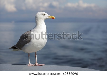 Profile of a standing seagull with sea and shore background
