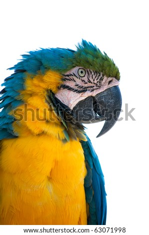 Profile of gold and blue macaw isolated on white background - stock photo