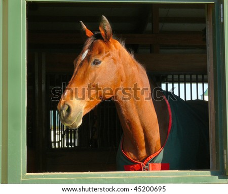 profile of horse head in window - stock photo