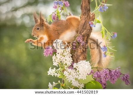 profile of red squirrel  standing on tree trunk between flowers and leaves with blurry hand - stock photo