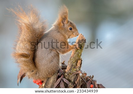 profile of squirrel who is looking away and standing on tree trunk