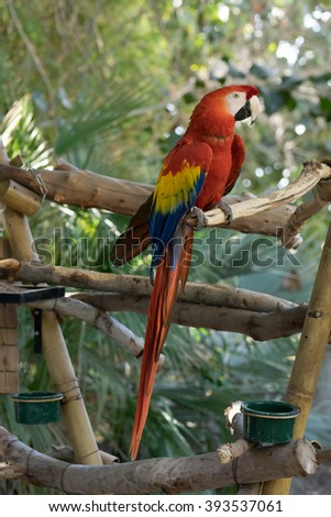 Profile portrait of macaw parrot perched on a branch