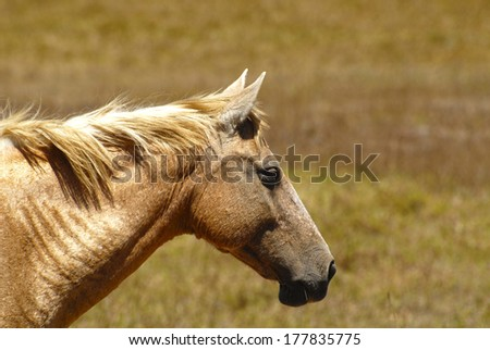 Profile shot of a Palomino Mare at a farm field