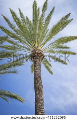 promenade along the sea of palms in Marbella Andalucia Spain