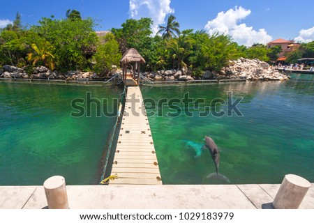 Promenade at Caribbean sea with swimming dolphins, Mexico