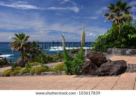 Promenade in Puerto de la Cruz with tropical canarian vegetation, Tenerife, Canary Islands - stock photo