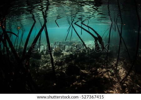 Prop roots descend into the shadows of a submerged mangrove forest in Komodo National Park, Indonesia. This beautiful region harbors an extraordinary amount of marine biodiversity.
