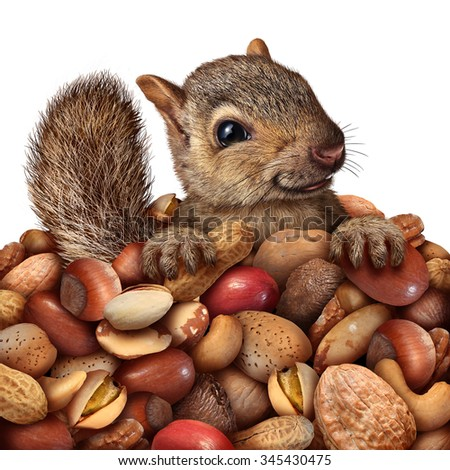 Prosperity and savings business concept as a squirrel holding a group of peanuts and assorted nuts as a cute furry rodent saving and investing or a natural healthy food symbol for health snacks. - stock photo