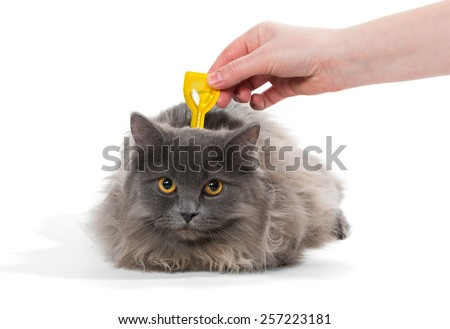 Protect the cat from ticks and fleas, isolated on white background - stock photo