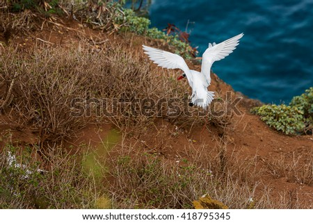 Protected birds at the Kilauea Point National Wildlife Refuge on the island of Kauai, Hawaii