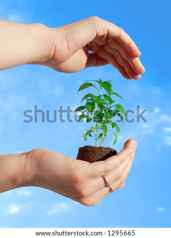 Protecting a new plant - stock photo