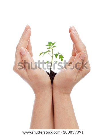 Protecting life concept - woman hands shielding young seedling