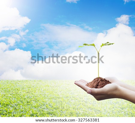 Protecting the forest,Plant a tree:Trees in hands with nature abstract background. Ecology concept. - stock photo
