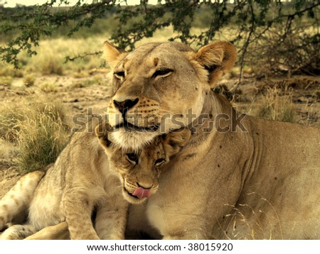 Protective mother - stock photo