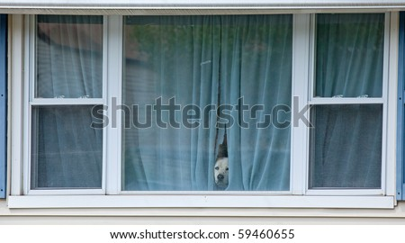 Protective Watch Dog Looking Through His Window - stock photo