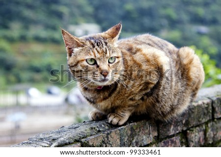 protrait of cat brown with black stripes looking ahead - stock photo