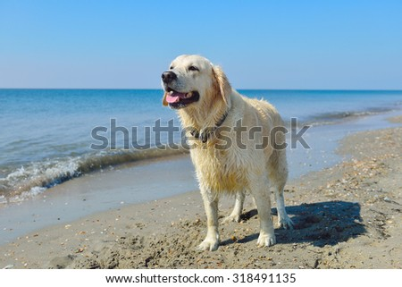 proud dog standing happy near  the water and enjoying  the beach