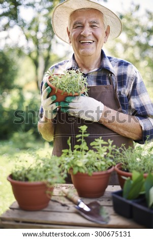 Proud of fresh herbs in pot - stock photo