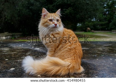 PROUD RED CAT  - stock photo