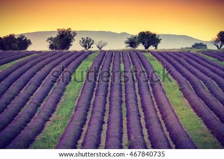 Provencal sunset with lavender field near Valensole, Provence, France