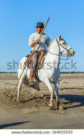 PROVENCE, FRANCE - 07 MAY, 2015: Groom shows White Camargue Horse in the swamp nature reserve in Parc Regional de Camargue - Provence, France