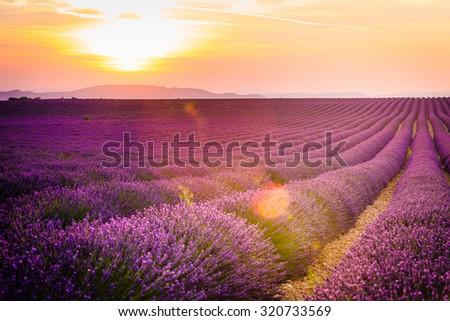 Provence, Lavender field at sunset, Valensole Plateau - stock photo