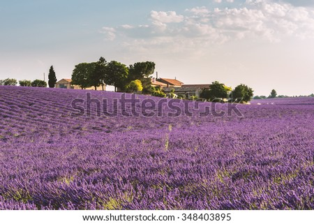 Provence lavender field with a farm near the Plateau de Valensole, France