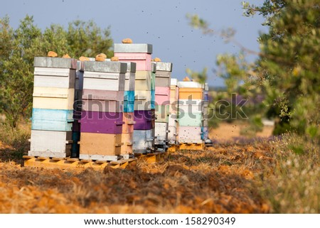 Provence meadow with bee hives - stock photo