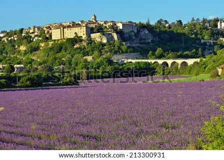Provence rural landscape. Lavender field near medieval village of Sault - stock photo