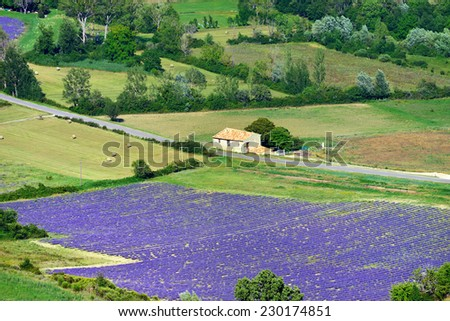 Provence rural landscape. View from above on the lavender field and farmhouse near village of Sault - stock photo
